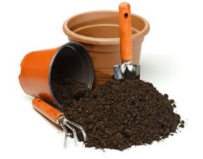 pot & potting soil